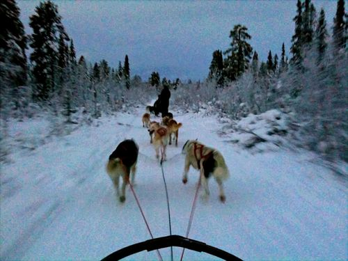 Josh k dog sled ride in sweden b 121209