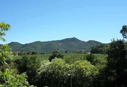 12 view from room at vintage inn in yountville ca